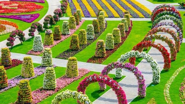 Flores en el desierto revista el medio for America todo un inmenso jardin