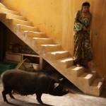 'Un cerdo en Gaza'