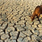 drought-water-scarcity-15