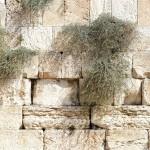 Al Aqsa: desmontando el peligroso mito antisemita de la Unesco